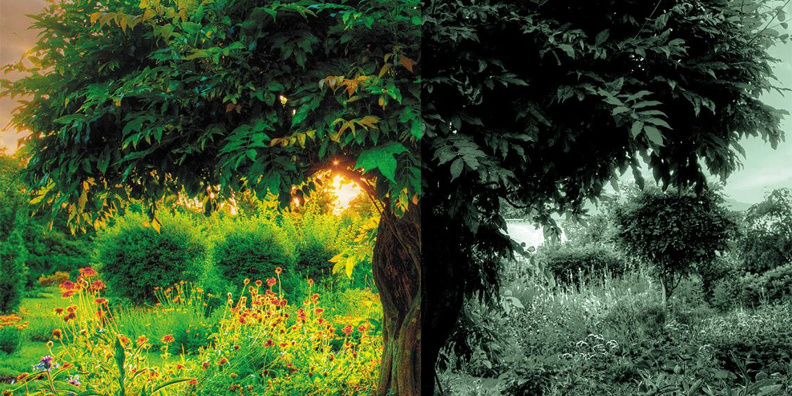 Two Trees in the Garden