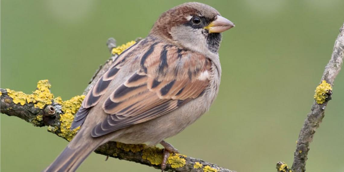 a sparrow sitting on a tree